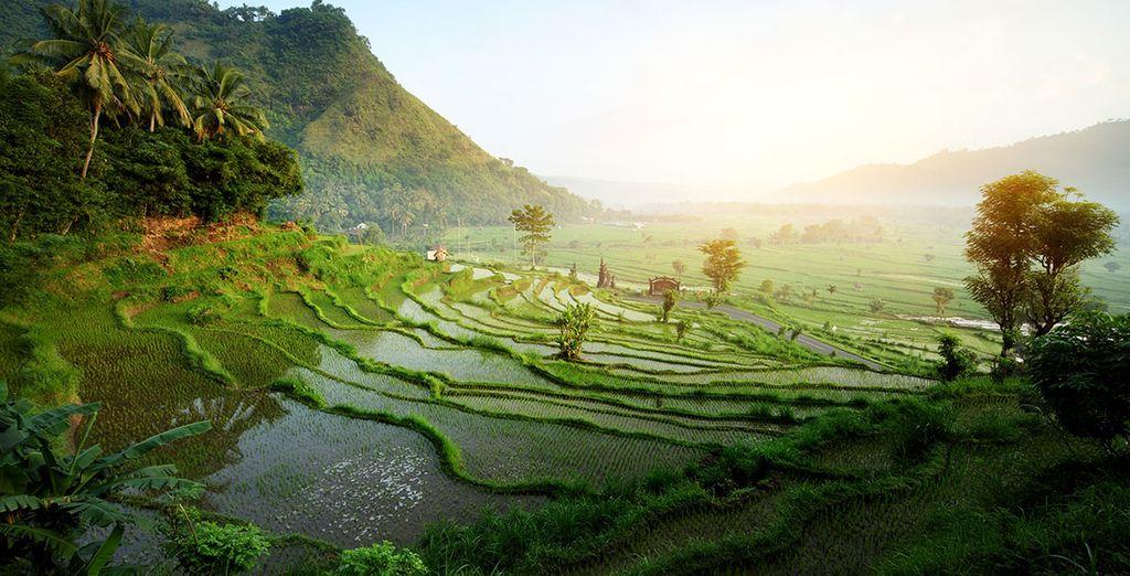 Dans l'une des régions les plus surprenantes de Bali