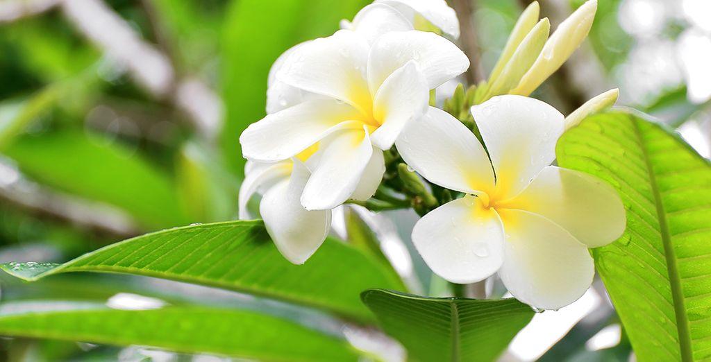 La Polynésie Française est une fleur précieuse