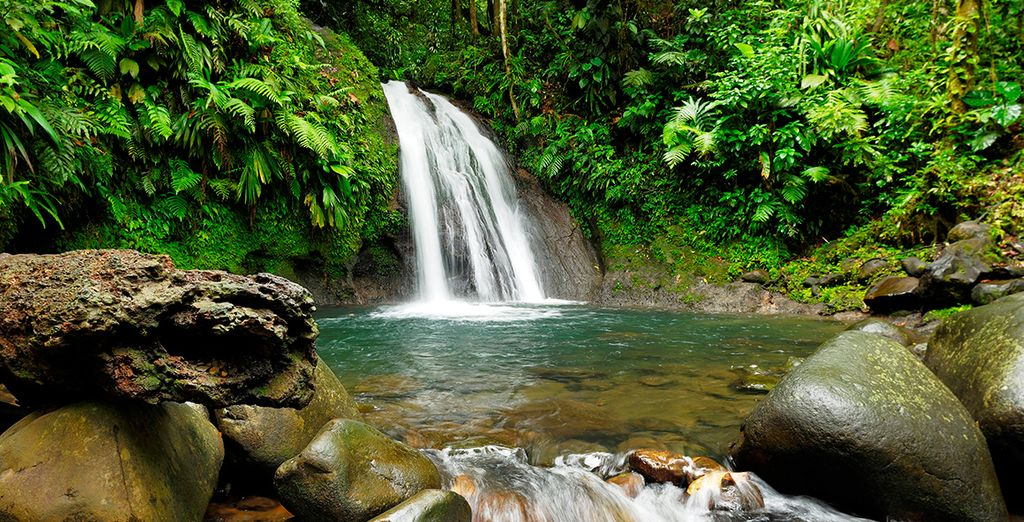 Photographie des cascades et chutes d'eau du parc naturel de Guadeloupe