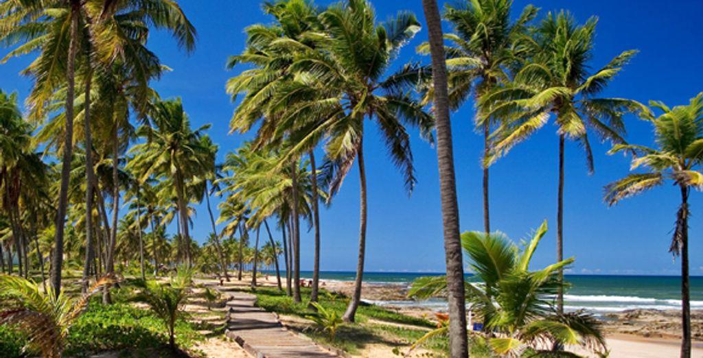 Les plages bahianaises