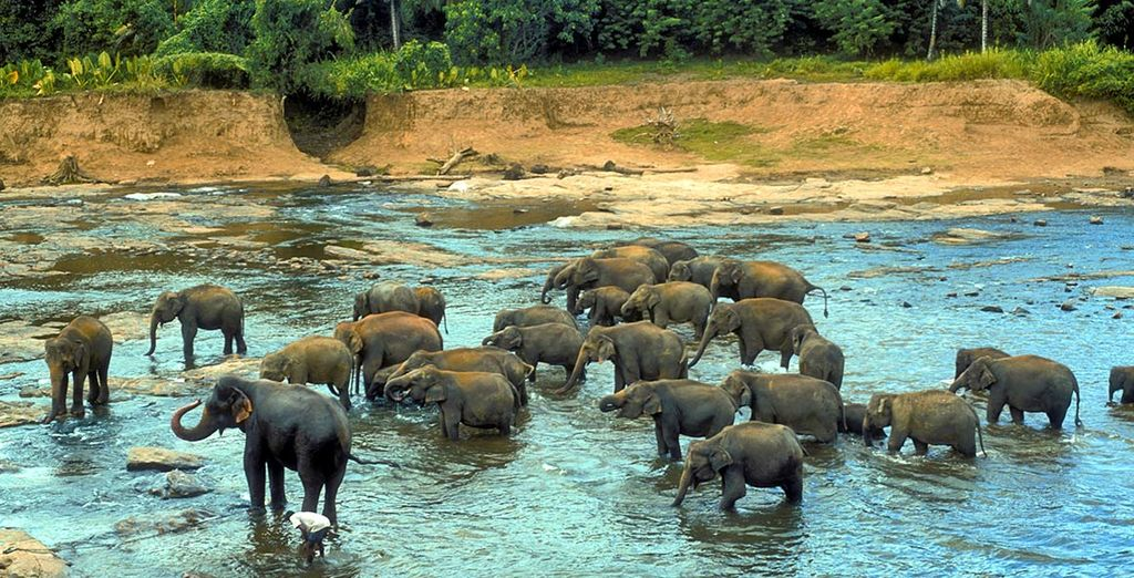 Soggiorno Mare Sri Lanka : Recensioni minitour e soggiorno mare in sri lanka