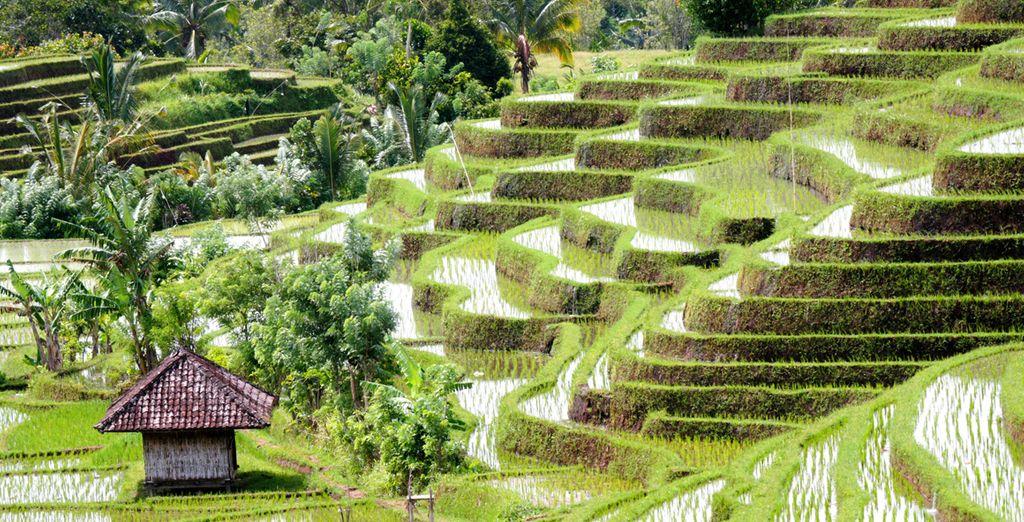 Fotografia delle bellissime risaie di Bali, Indonesia