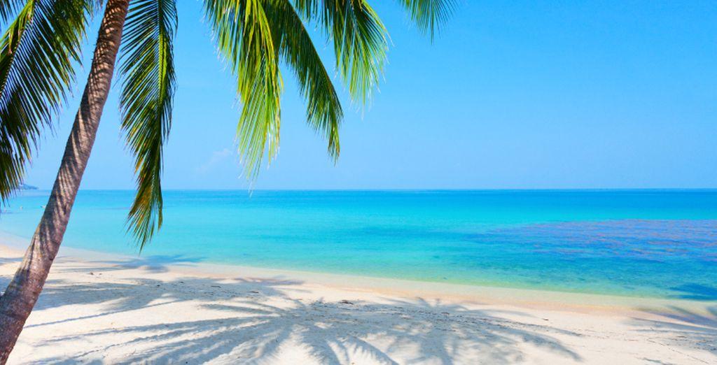 Perdetevi nel mare infinito di Koh Samui