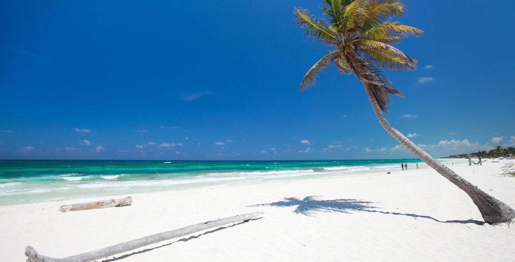 Trascorrete splendide giornate in spiaggia tra tuffi e tintarella!