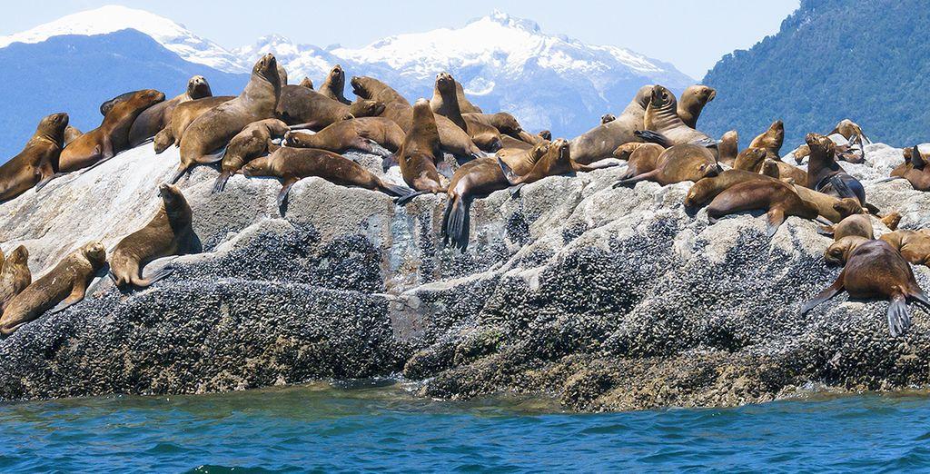 Ammirerete la natura e le vastità di specie animali presenti nei parchi naturali del paese
