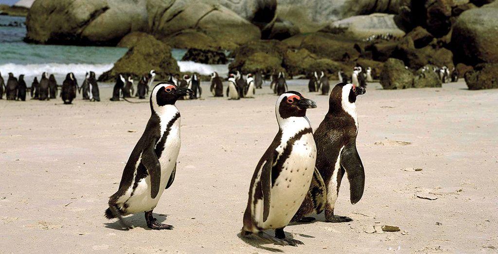 Partite per un viaggio unico in Sudafrica