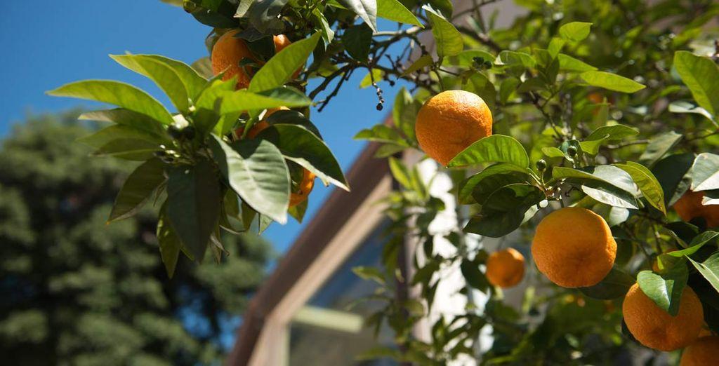 Immerso in un giardino di aranci
