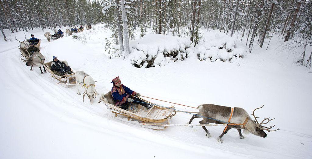 potrete conseguire la patente internazionale di guida alle renne