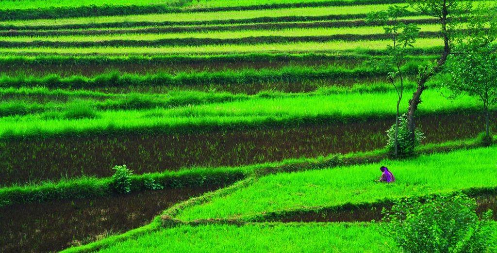 Ammirate i colori vivi delle piantagioni di tè