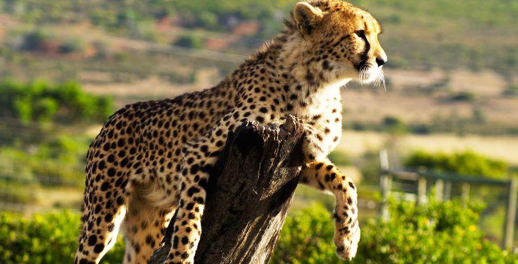 Un paradiso naturale dove la fauna locale regna sovrana