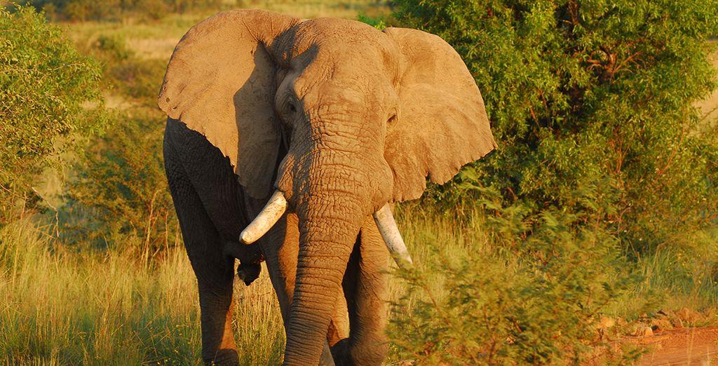 Elefanti, leoni, bufali, rinoceronti e leopardi