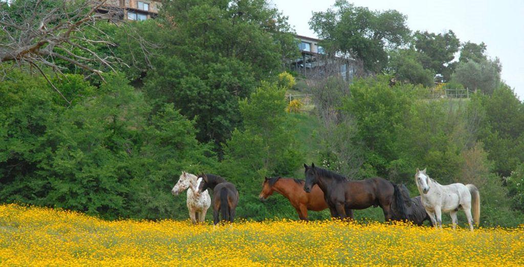 Godetevi delle splendide gite a cavallo negli stupendi scenari della Toscana