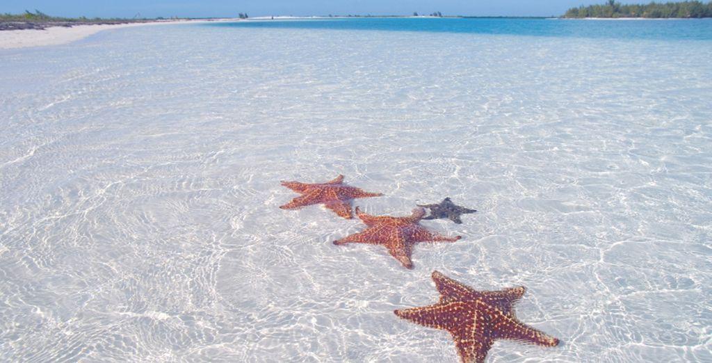 Cuba non è solo mare e sole
