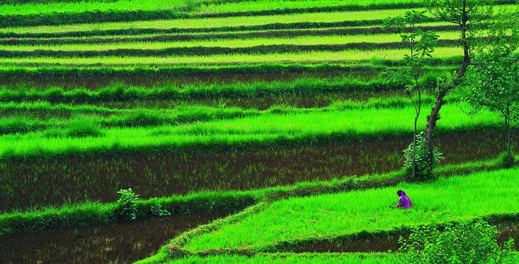 Dalle colline di un verde rigoglioso