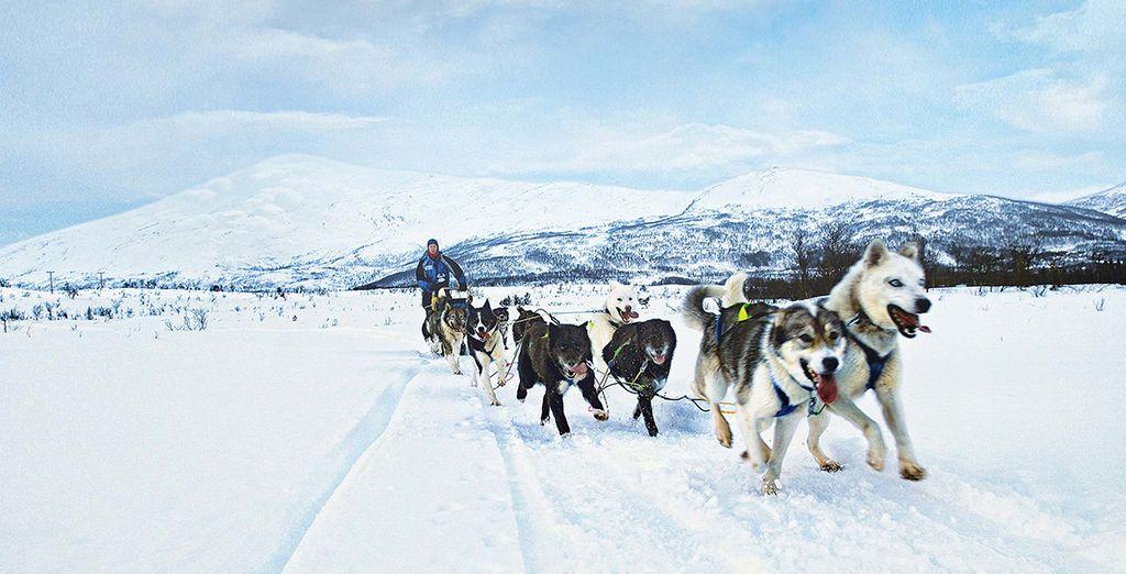 Scegliete i safari tra i ghiacci con slitte trainate da cani husky