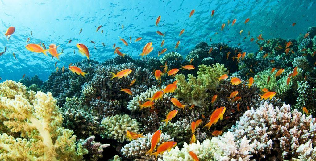 Crociera in catamarano alle Seychelles con possibile estensione a Abu Dhabi