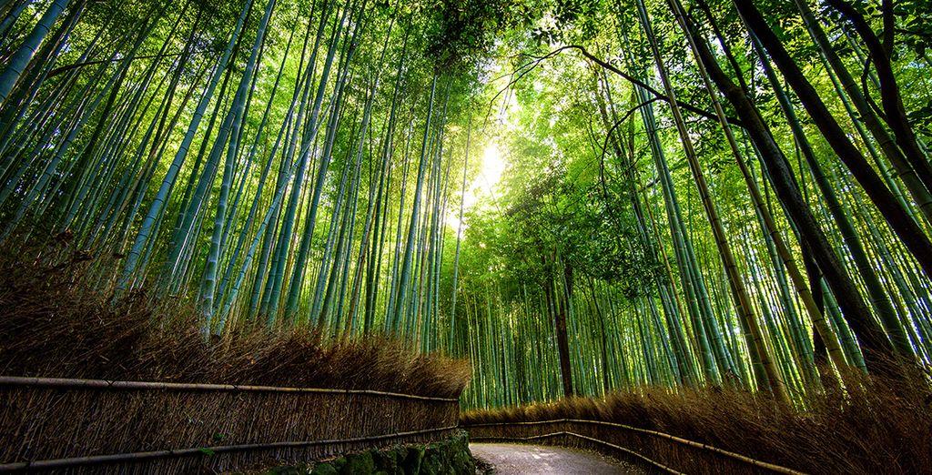 del bamboo più alto