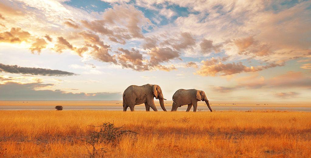 Benvenuti in Kenya