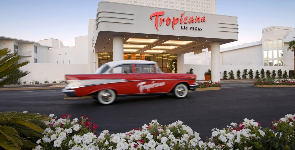 L'Hotel Tropicana è il luogo perfetto dove soggiornare