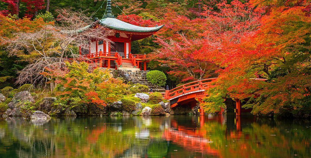 Tour del Giappone - Speciale estate / autunno