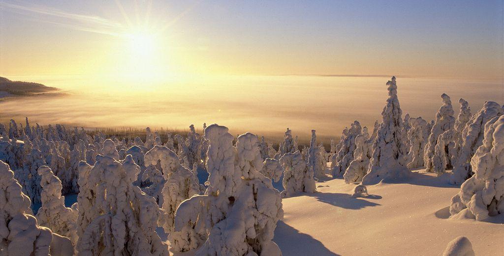 Ontdek het magische winterlandschap van Lapland