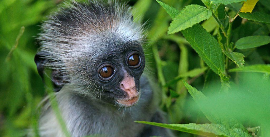 Bezoek het Jozani Regenwoud