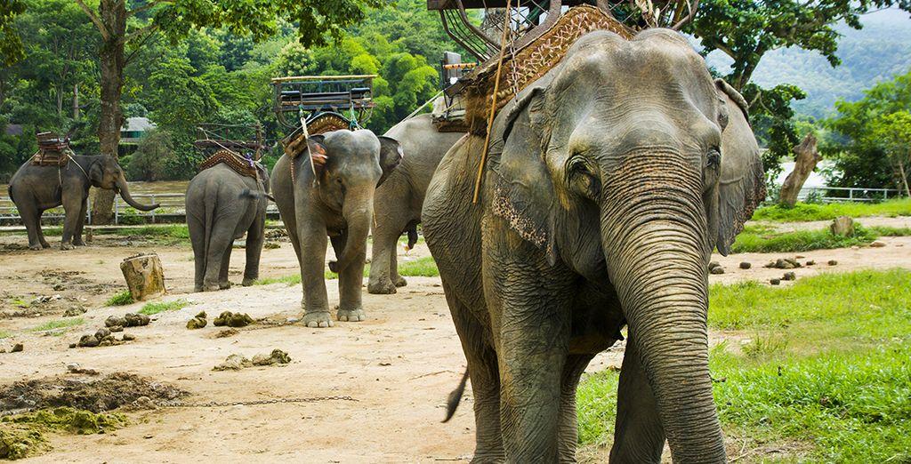 Zoals het natuurpark Khao Sok