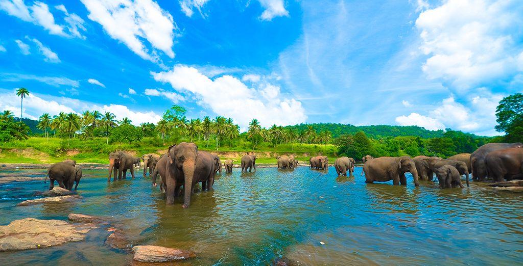 Kies uit het ruime aanbod aan optionele excursies om uw reis nog interessanter te maken