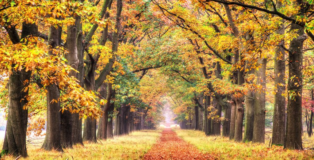Of een wandeling in het bos