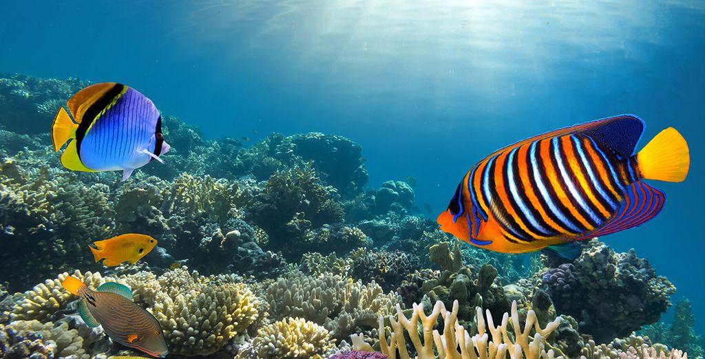 Of dompel u onder in het blauwe water van de Caraïbische Zee