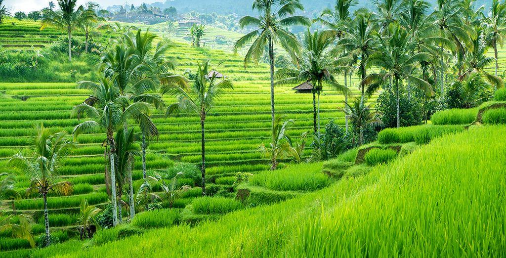 Waar u uw trip begint in de jungle van Ubud