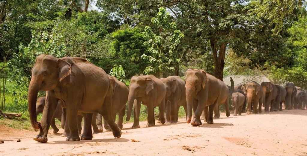En de wilde dieren op het eiland...
