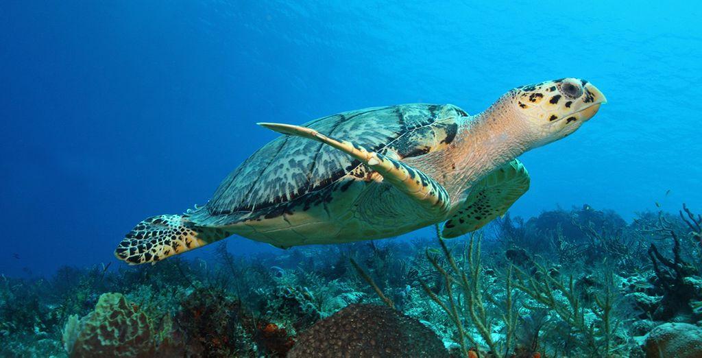 En een fascinerende onderwaterwereld
