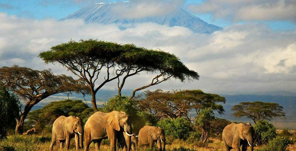 Op zoek naar de wilde dieren in hun natuurlijke habitat