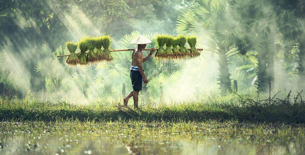 Ontdek Cambodja op zijn mooist