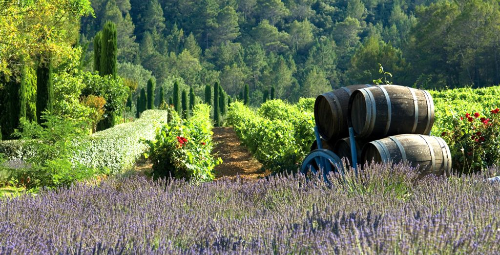 Nestled in the heart of Provence