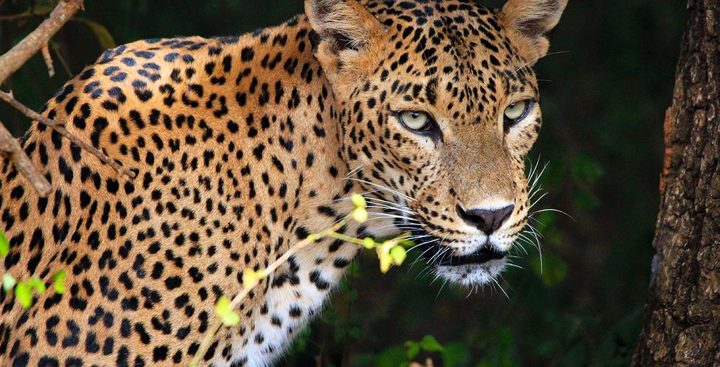Discover Sri Lanka's abundance of wildlife