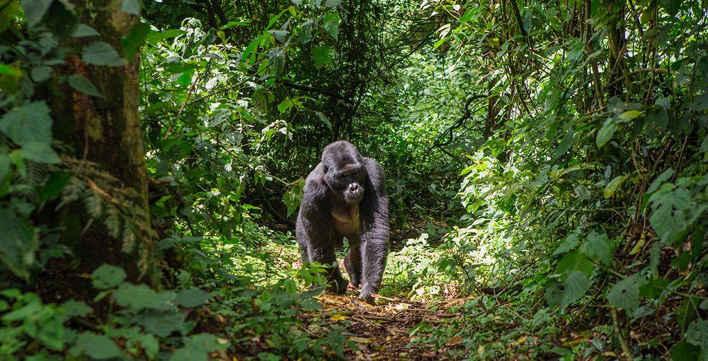 Cape Town, Kruger National Park & Gorilla Trekking Tour in Uganda