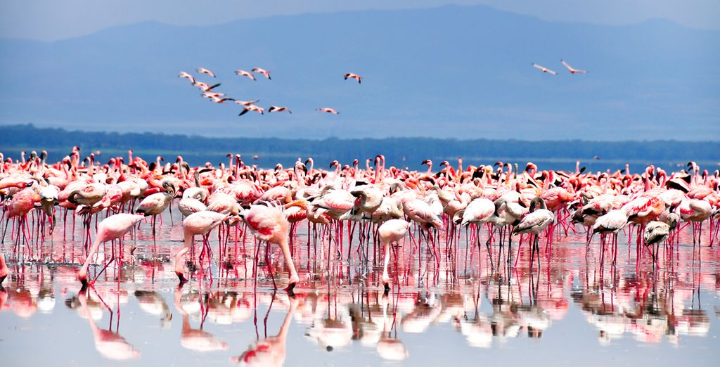 And experience Africa's unique beauty