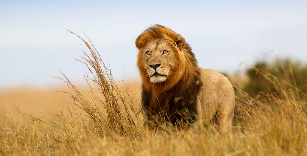And experience a spectacular safari for 3 nights