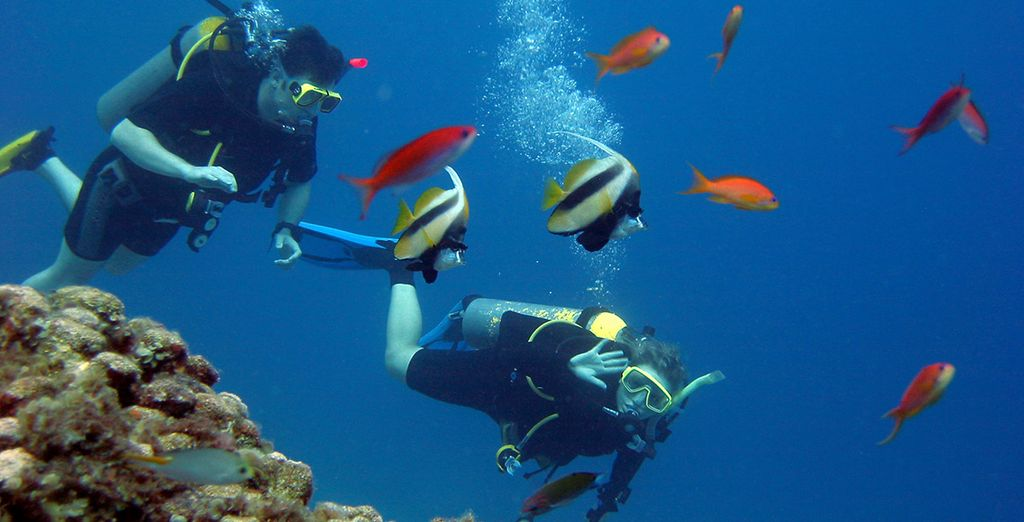 Explore the colourful marine life in the Red Sea
