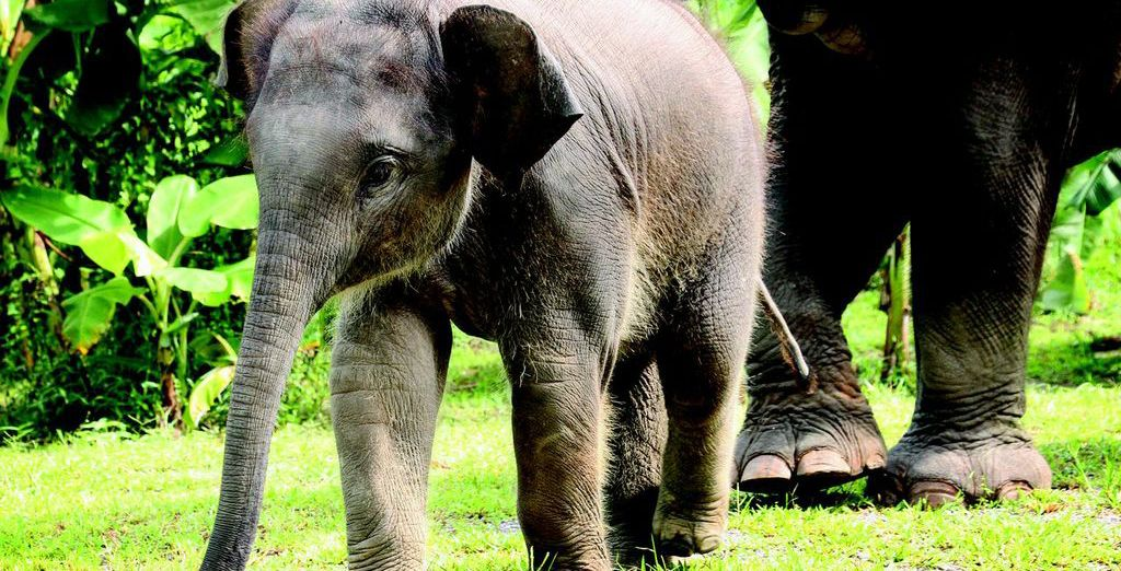 Get up close to some of Thailand's best known residents!