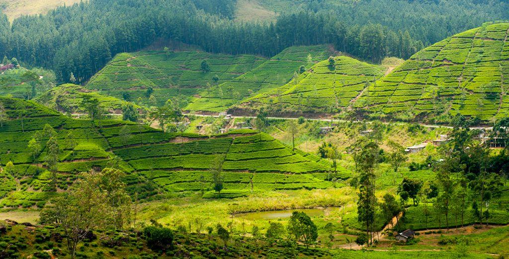 Lush, green scenery...