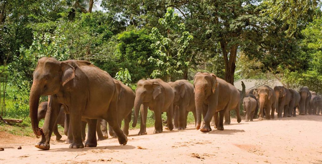 We've also included a trip to Pinnawala elephant sanctuary...