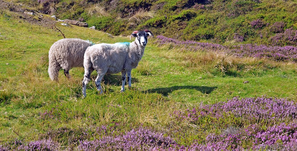 Residing on the edge of the Yorkshire Moors, perfect for brisk country walks