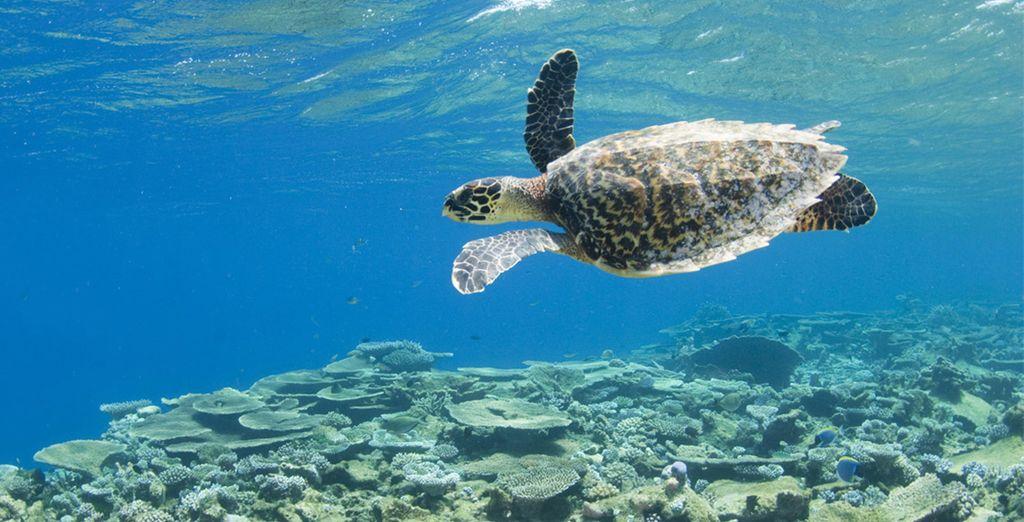 Or explore the amazing marine life