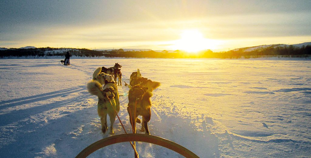 Head out & explore with a range of optional excursions from husky safaris...