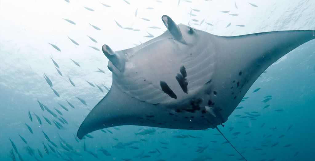 Or discover incredible marine life beneath the waves