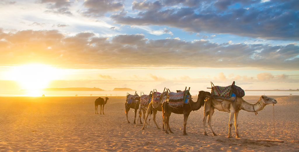 Or venture into the desert on an exciting excursion