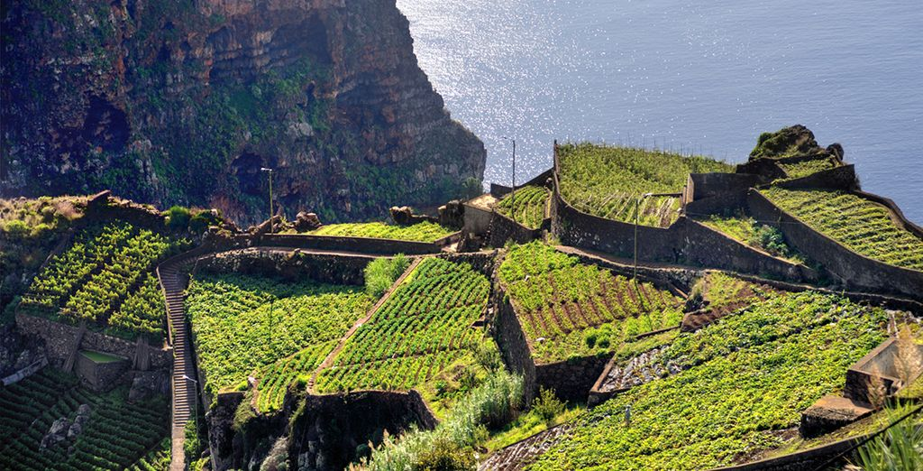 The cascading vineyards of Madeira